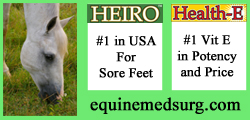 Equine Med Surgery